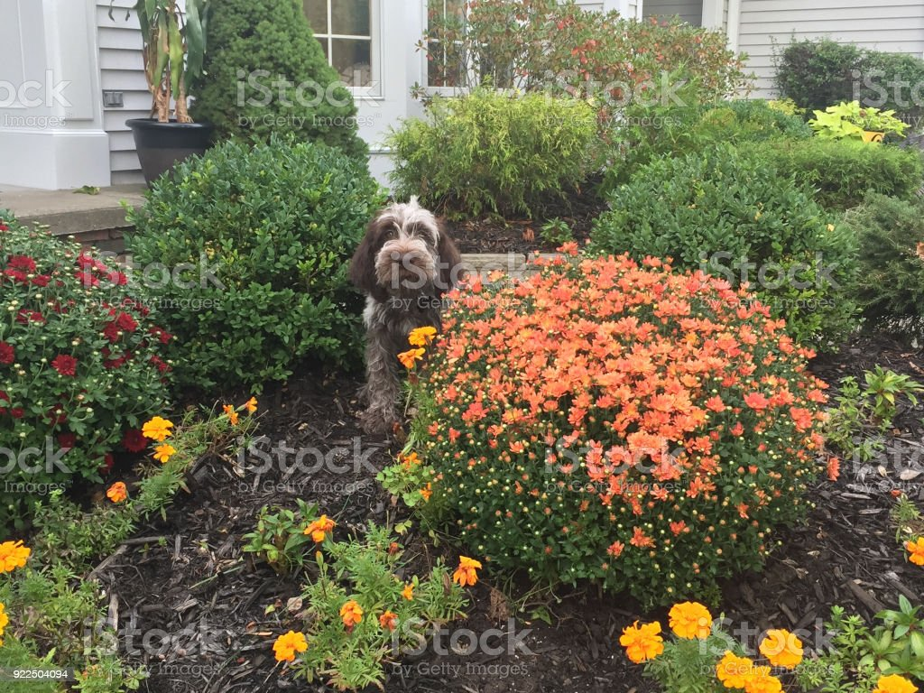 Dogs and mums stock photo