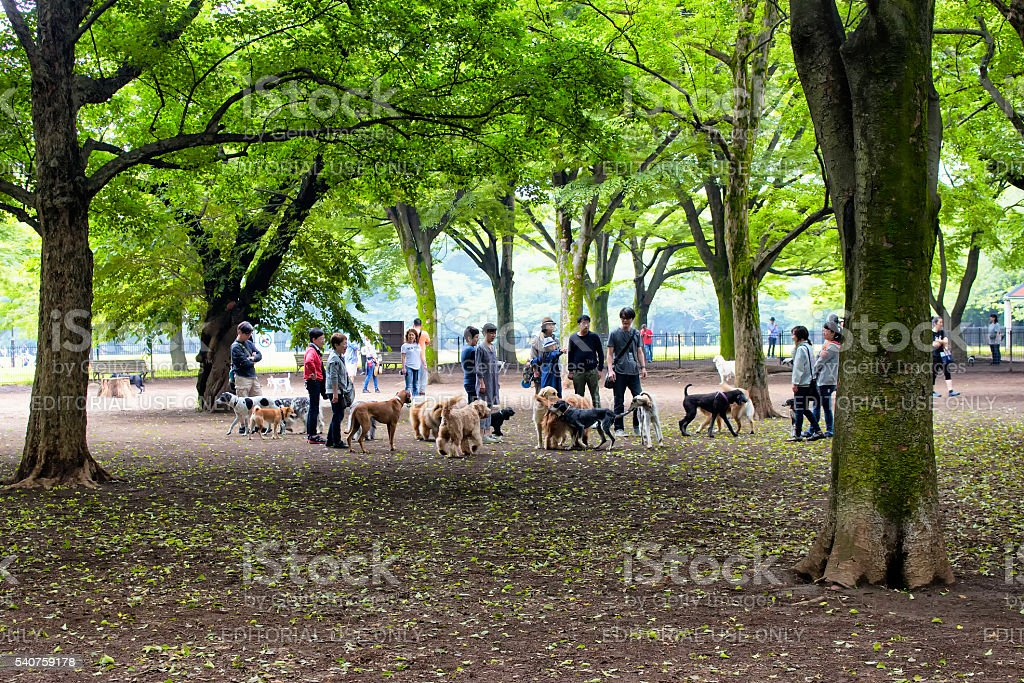 Dogs and owners play in nature at Yoyogi park stock photo