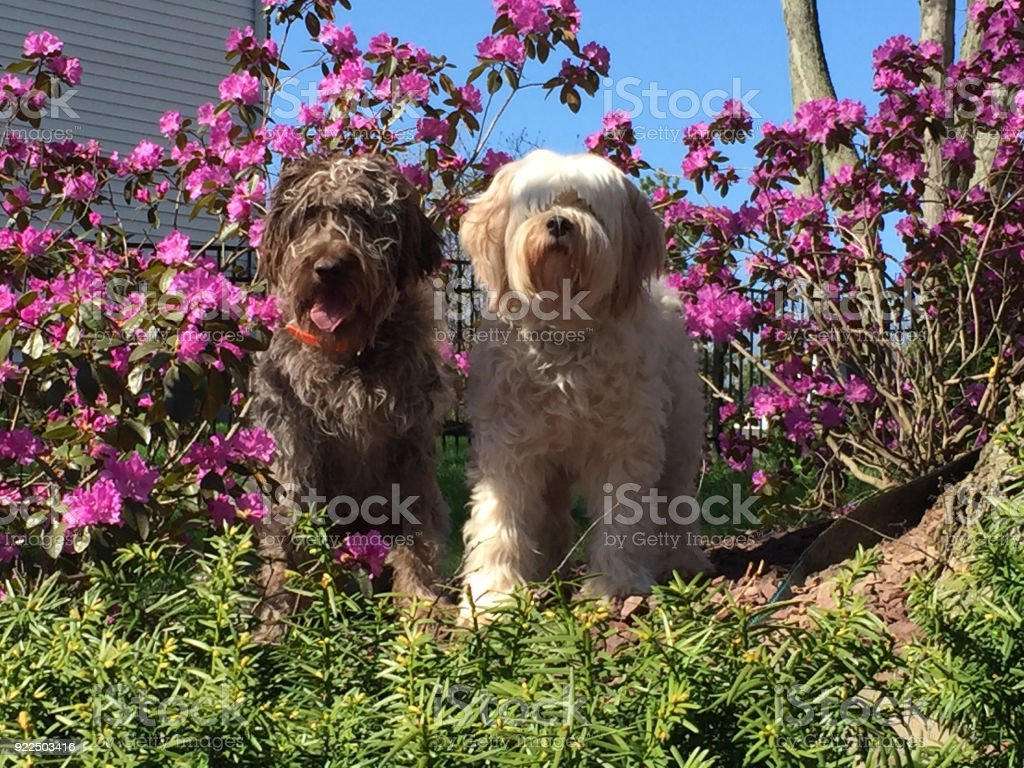 Dogs and pink flowers stock photo