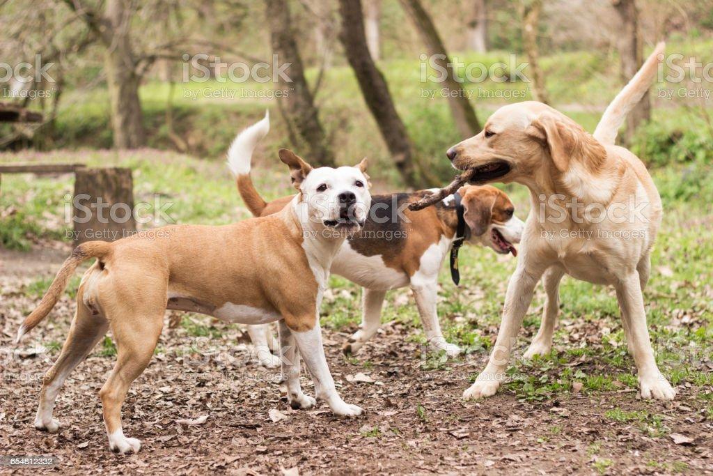Dogs are having fun stock photo