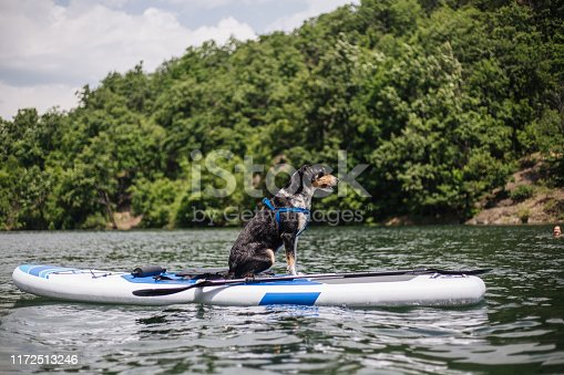 Dog sitting on a paddleboard in the middle of a lake