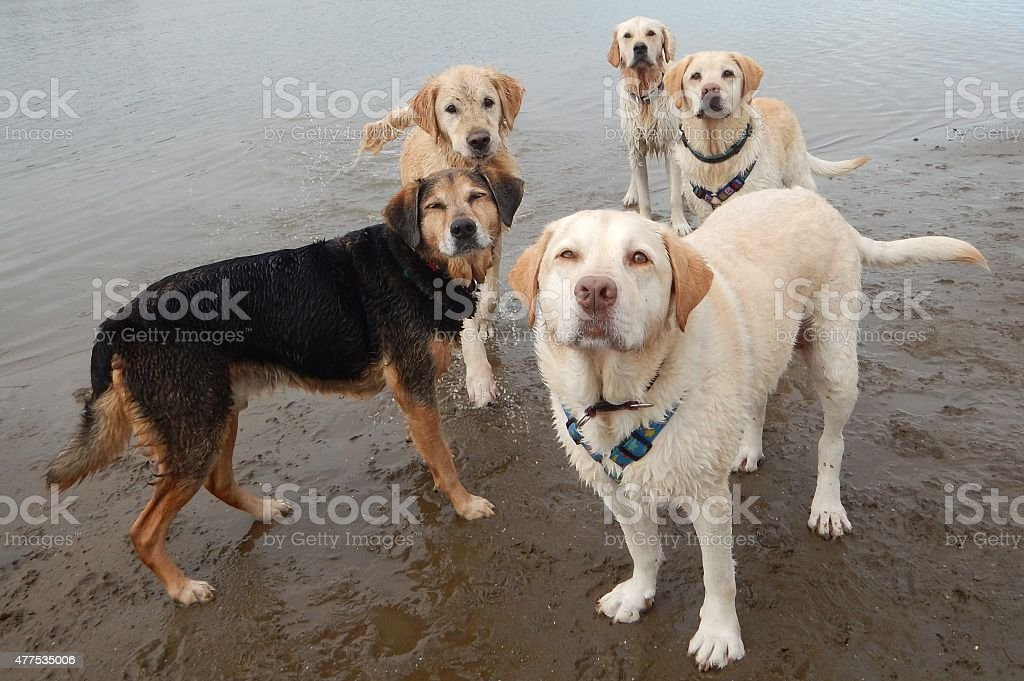 Dogs at the Beach stock photo