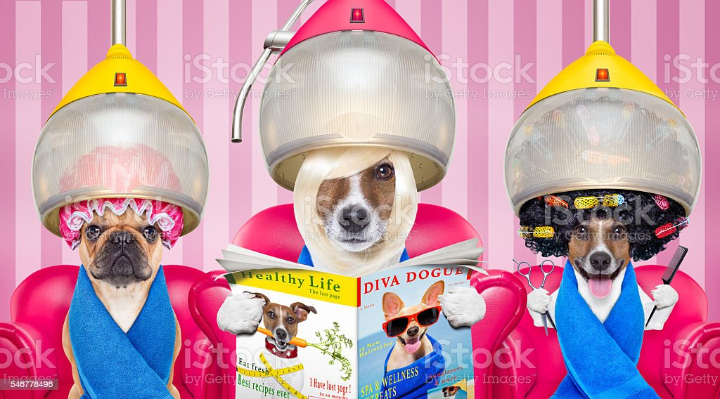 dogs at the  hairdressers or groomer stock photo