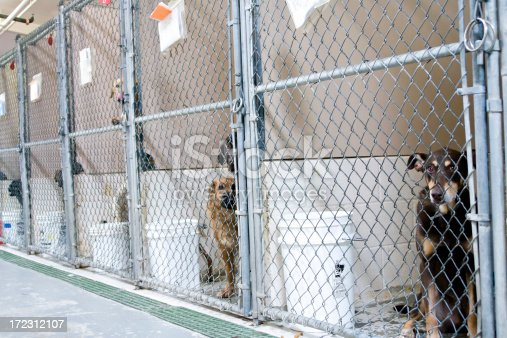 Dogs awaiting adoption in kennels