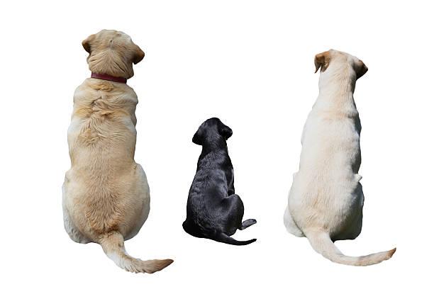 Dogs back picture id498031309?b=1&k=6&m=498031309&s=612x612&w=0&h=onofnv5pubdc12etxmxjndwe3xp9jgfkw5ycdw8nq g=
