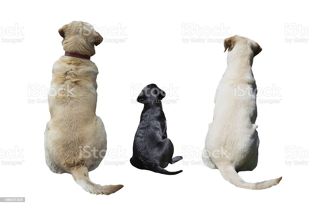 dogs back stock photo