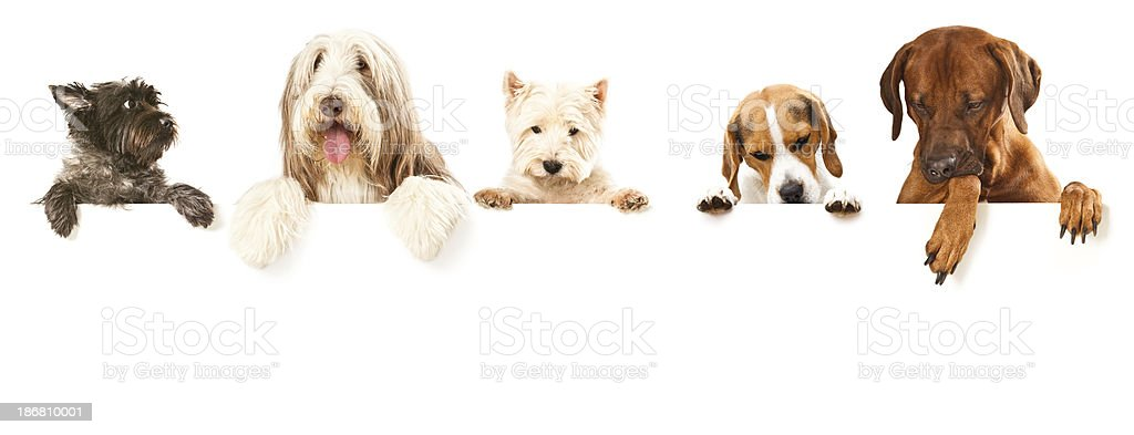 Dogs Banner stock photo