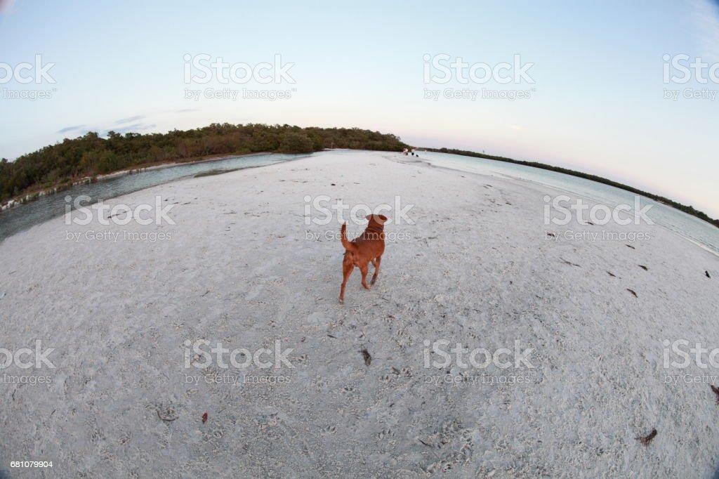 Dog`s beach. royalty-free stock photo