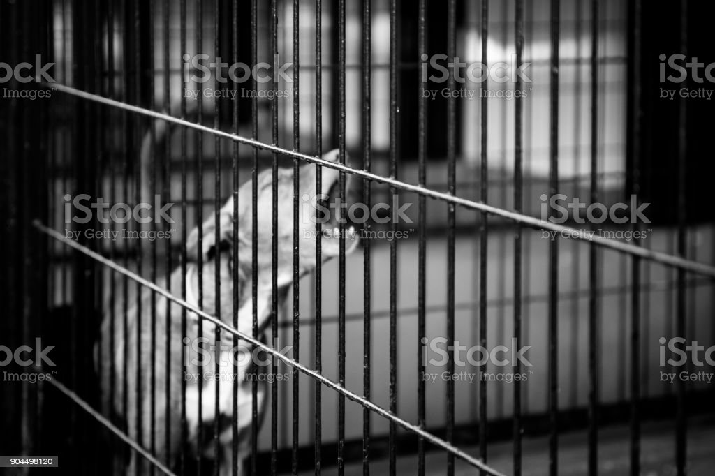 dogs behind bars in black and white. photographs to animals in cages
