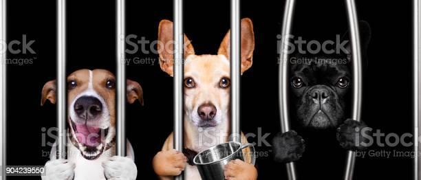 Dogs behind bars in jail prison picture id904239550?b=1&k=6&m=904239550&s=612x612&h=3l2mukv5qwncxelufm r9thb7bumkuhu6cu0xfmwgyu=