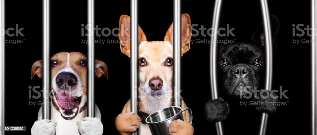 dogs behind bars in jail prison stock photo