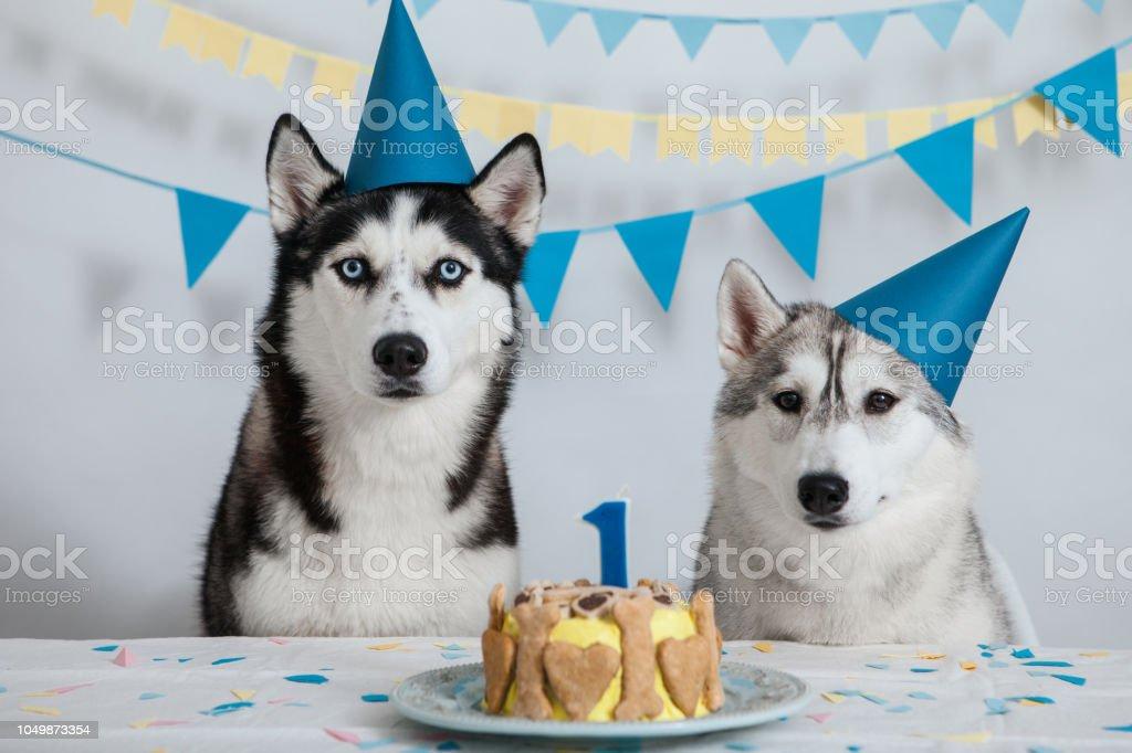 Dog celebrates its birthday