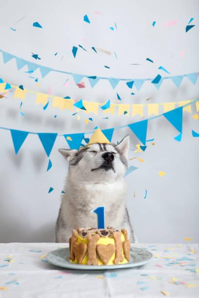 Geburtstag des Hundes – Foto