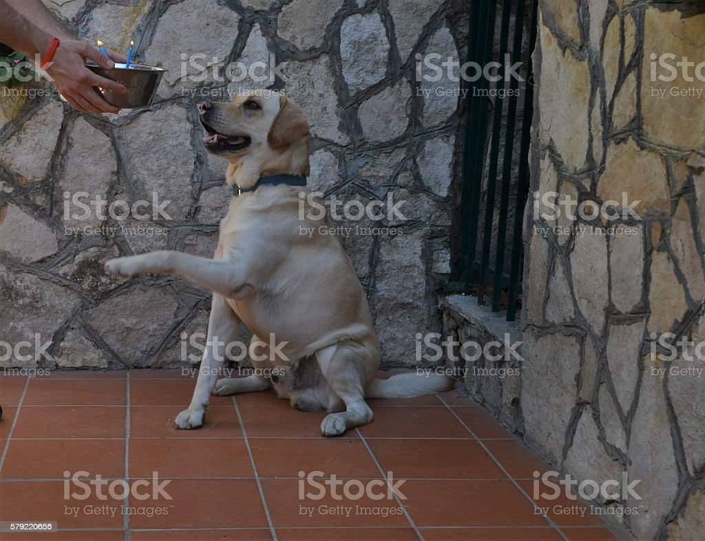 dog's birthday stock photo