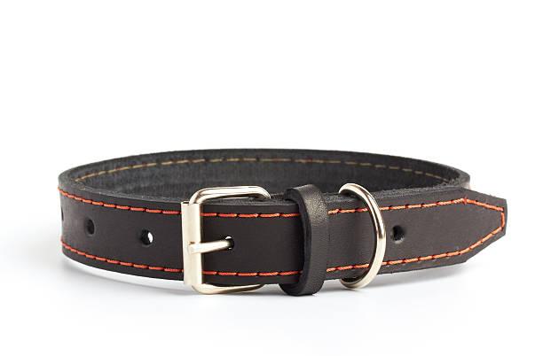 hunde-kragen - halsband stock-fotos und bilder