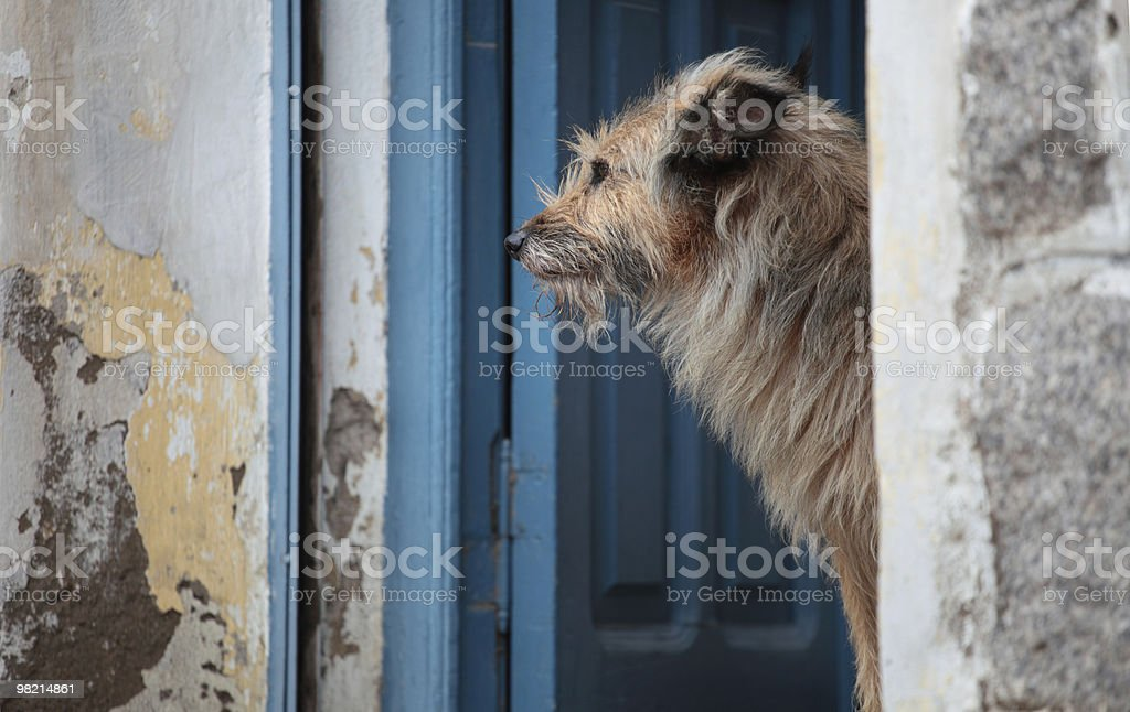 Dogs Days royalty-free stock photo