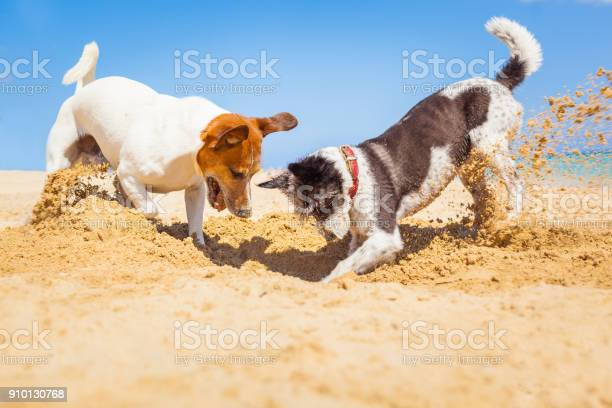 Dogs digging a hole at baech picture id910130768?b=1&k=6&m=910130768&s=612x612&h=lgijn aaireje5dp6eqdhey3zfls7hu8 zclugk33a8=