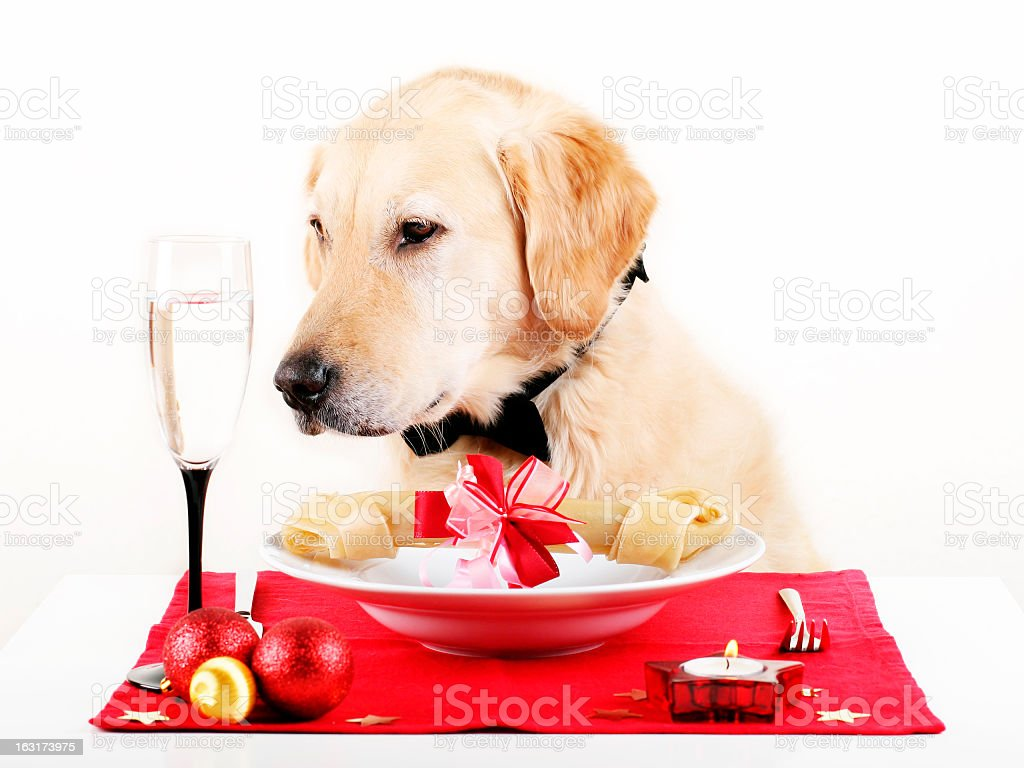 Dogs Dinner royalty-free stock photo