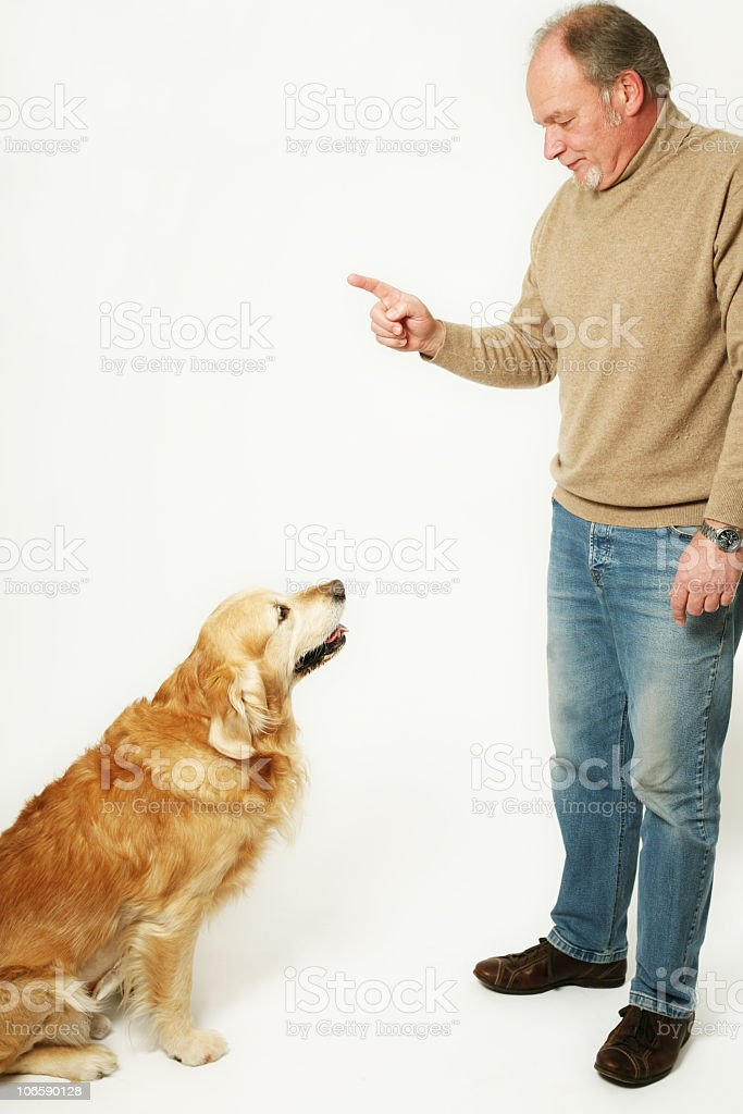 dogs education royalty-free stock photo