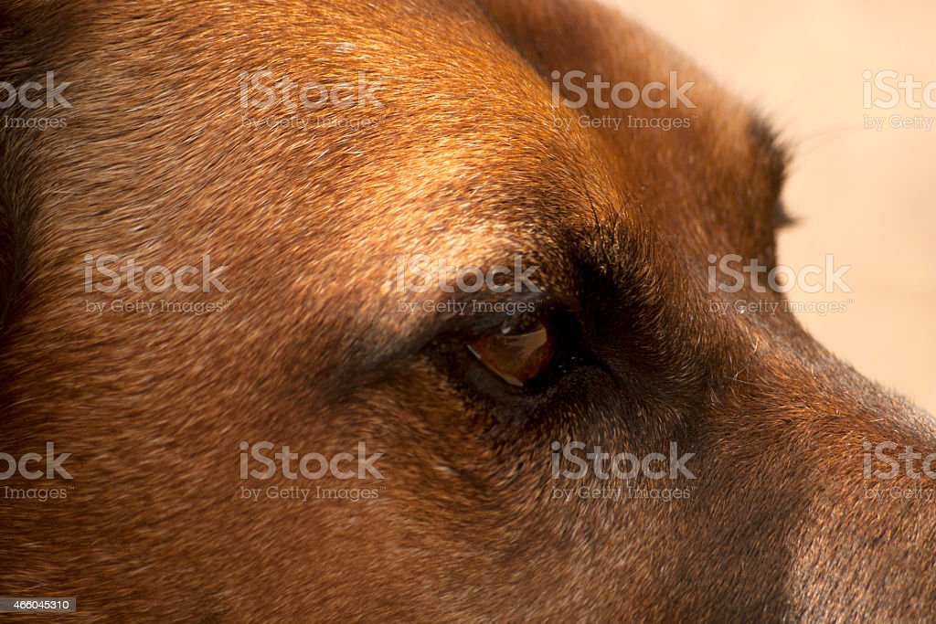 Hunde Auge Close up stock photo