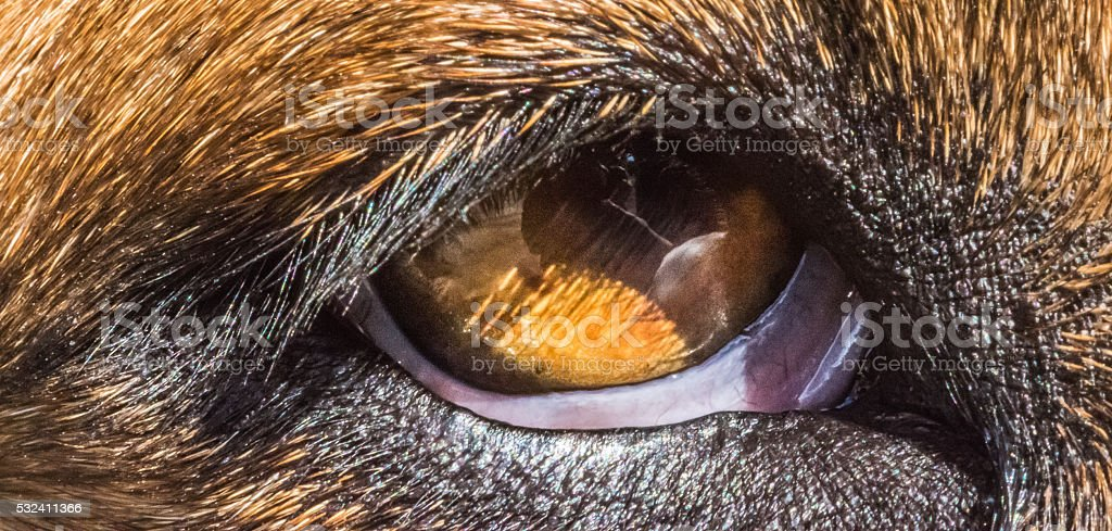 Close up eye photo of my dog \'Bama\'. She was rescued from a shelter...