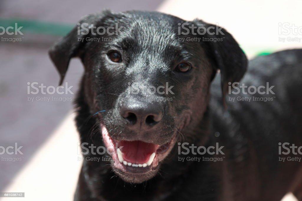 Dog`s face. royalty-free stock photo