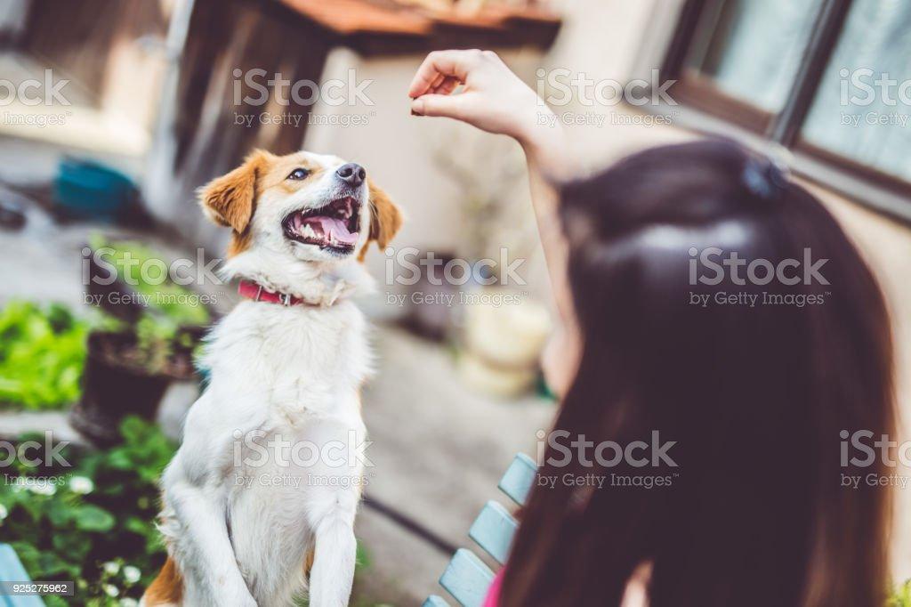 Dog's Favorite Snacks stock photo