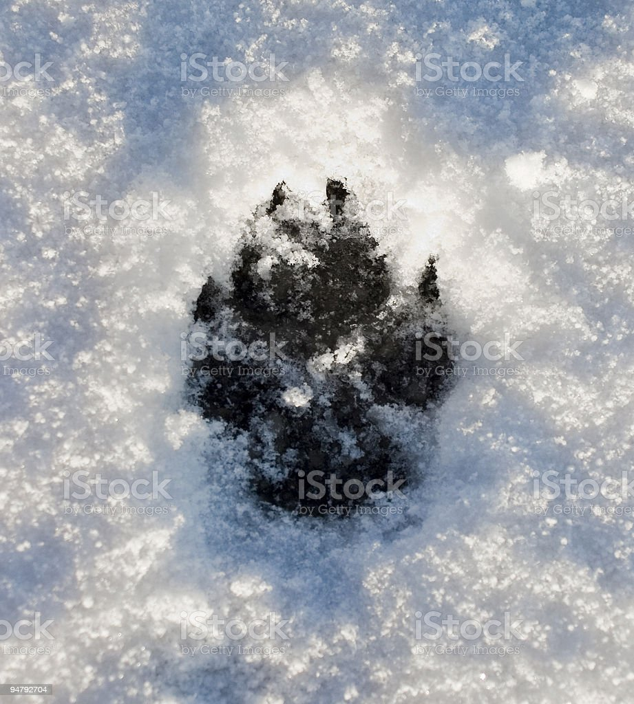 Dogs Footprint on Snow royalty-free stock photo