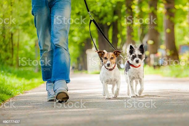 Dogs going for a walk picture id490777437?b=1&k=6&m=490777437&s=612x612&h=ekbt1woqbq6fblhqotdmo3eeacfy acx4rb82gagdgm=