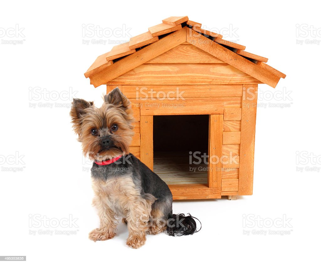 dog's house and small dog stock photo