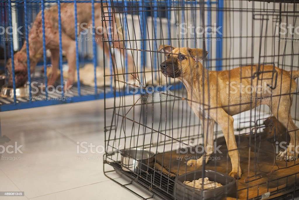 dogs in animal shelter stock photo