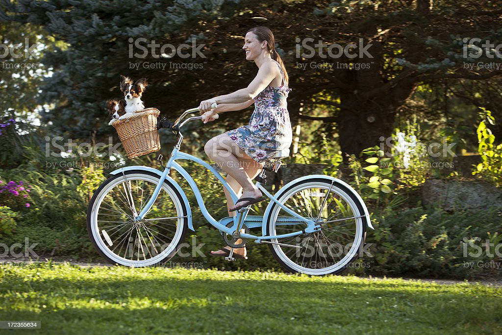 Dogs in Bicycle Basket royalty-free stock photo