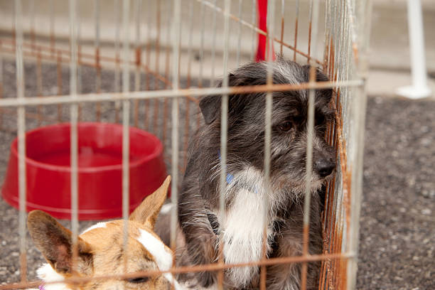 Hunde in Käfigen – Foto