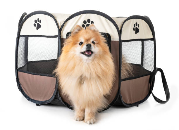 dogs in pen - playpen stock pictures, royalty-free photos & images