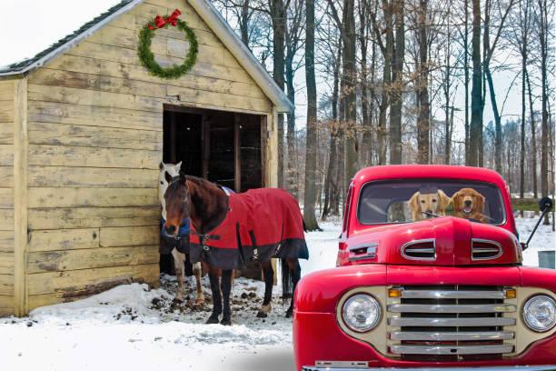 hunde in retro-roten lieferwagen von pferden - alte weihnachtsbäume stock-fotos und bilder