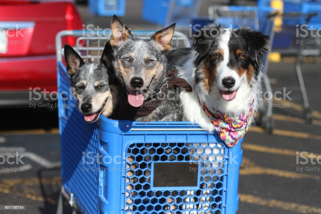 Dogs in Shopping Cart stock photo