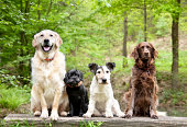 istock Dogs in the forest 171155760