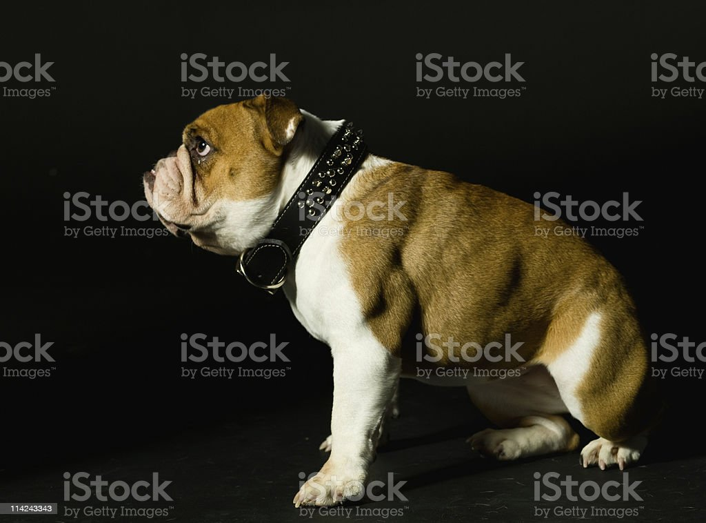 Dogs life royalty-free stock photo