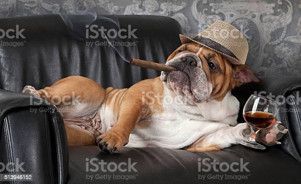 Dogs life picture id513946152?b=1&k=6&m=513946152&s=612x612&h=swlbzactw8vc6zqz1gld8wgej86nqsjhfjlw  huhpe=