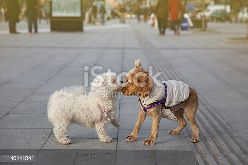 Amazing dogs are together.