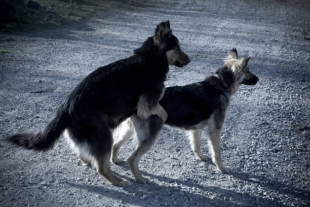 dogs love - england stock photos and pictures