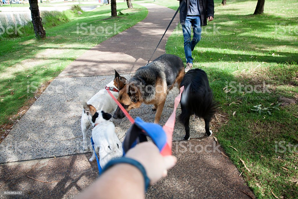 Dogs Meet In Park stock photo