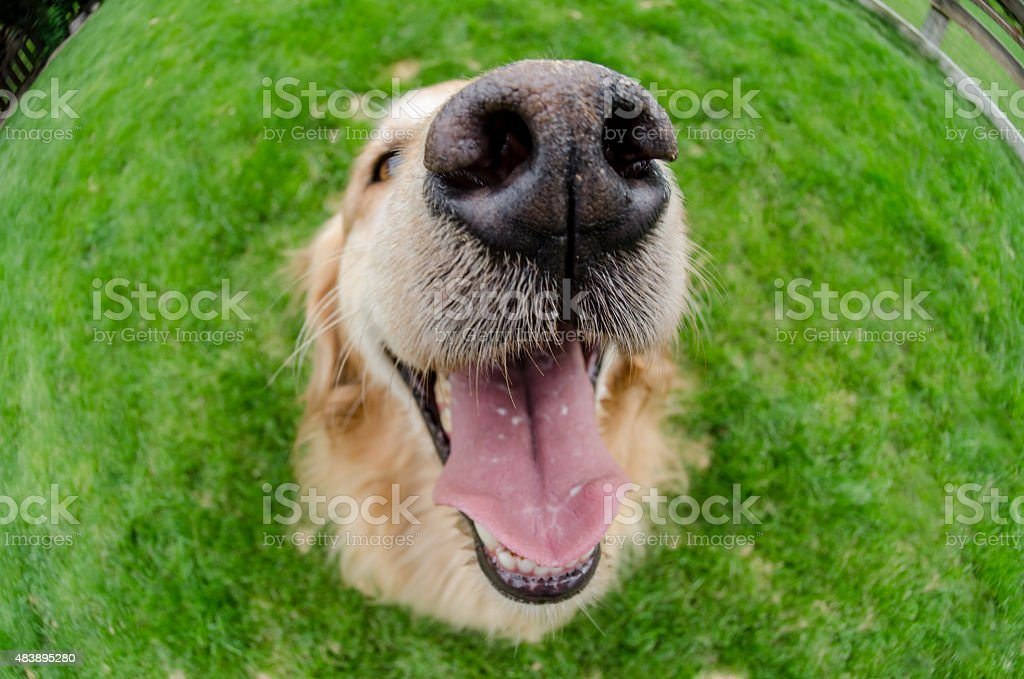 Dogs Mouth Close Up with Eyes Open stock photo
