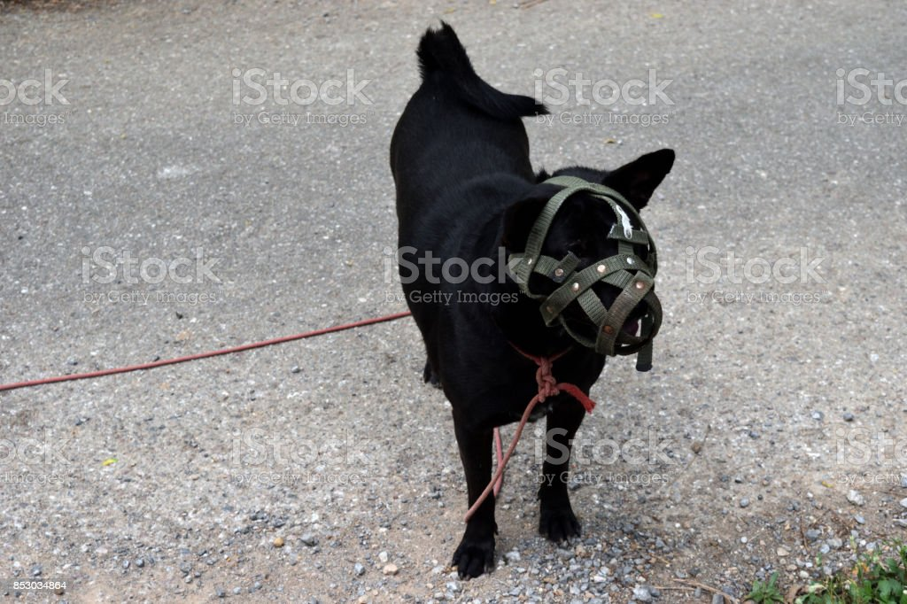 Dog's mouth was covered with muzzle stock photo