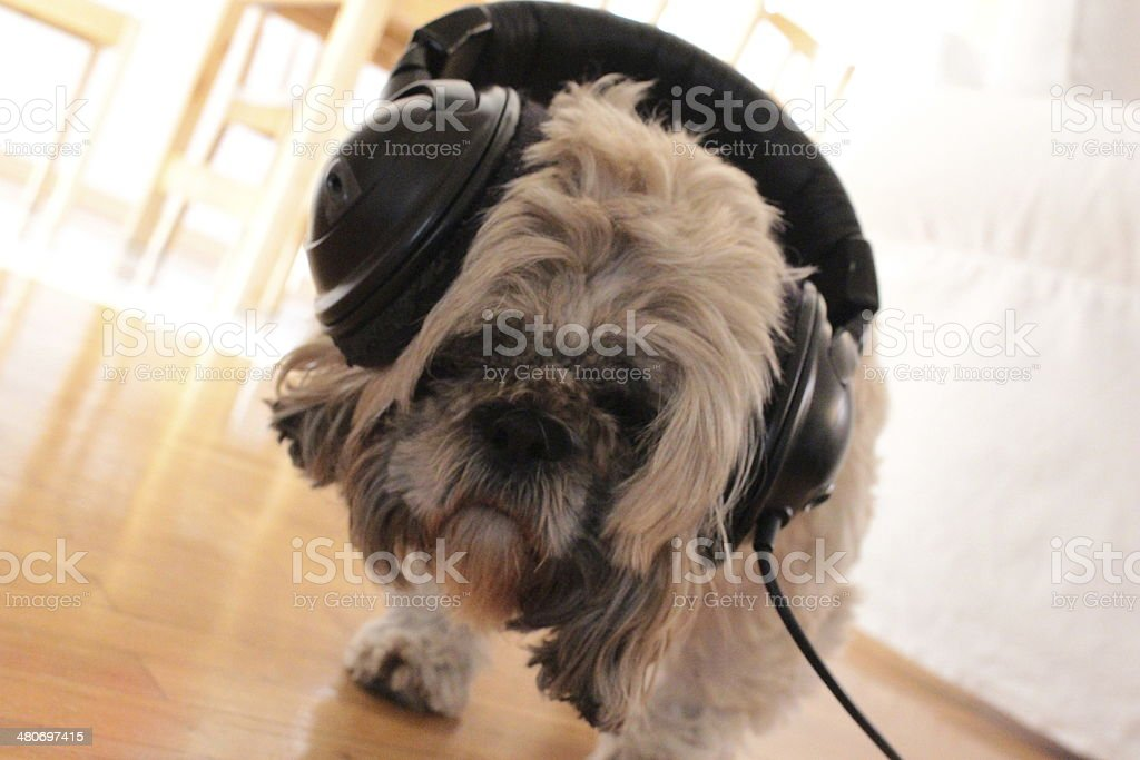 Dog's Music stock photo