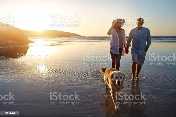 Dogs need walks for both exercise and mental stimulation picture id673344418?b=1&k=6&m=673344418&s=612x612&h=ewjkkboqhlmopttcuzk4ynniyejbumbaxmq ivorw 4=