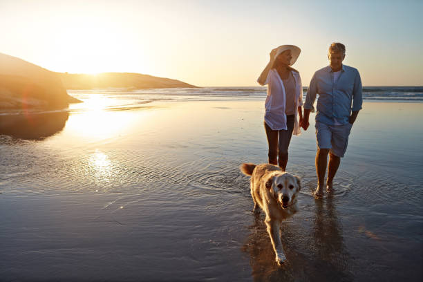 Dogs need walks for both exercise and mental stimulation stock photo