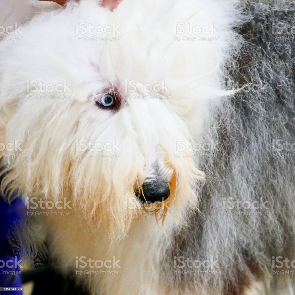Dogs of Choice royalty-free stock photo