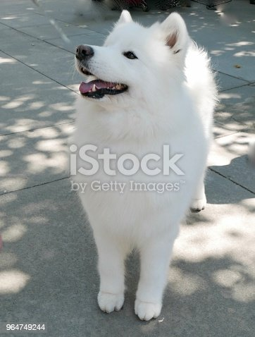 Dogs Of Choice Stock Photo & More Pictures of Animal Behavior