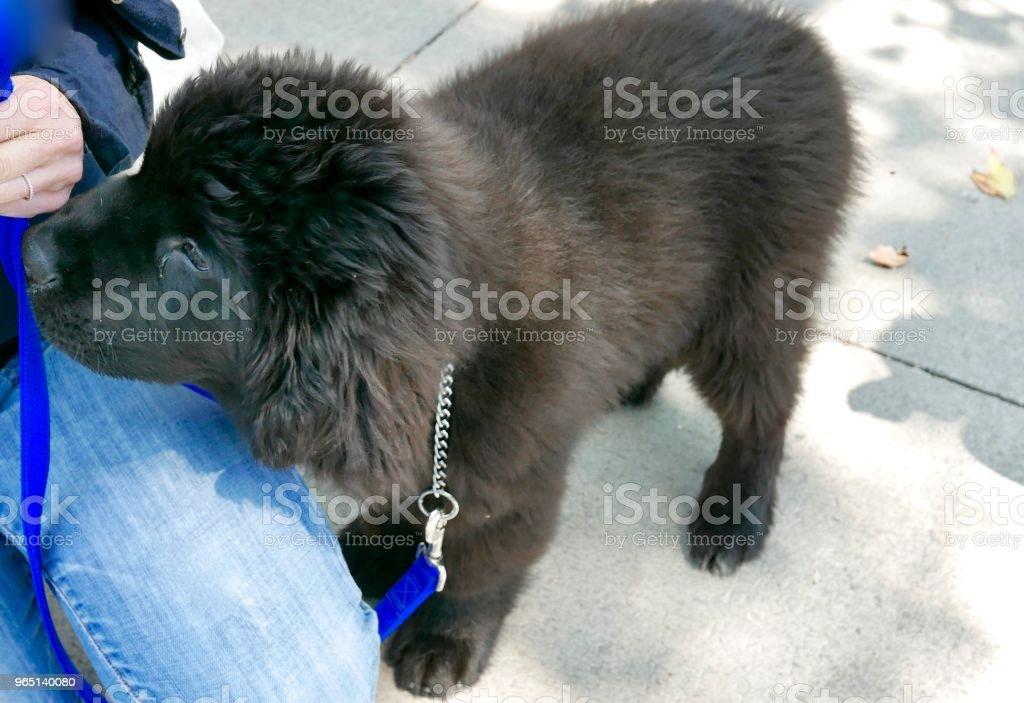 Dogs of Choice zbiór zdjęć royalty-free